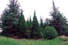 Arborétum Cserszegtomaj